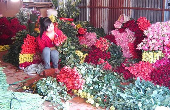 Giá hoa hồng tăng mạnh