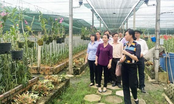 Vườn lan của HTX Hoa lan Huyền Thoại được lựa chọn thí điểm từ nhiều năm qua,  nhưng vẫn chưa thu hút nhiều du khách
