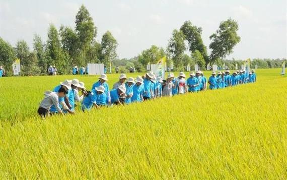 Xây dựng mô hình gạo theo hướng hữu cơ