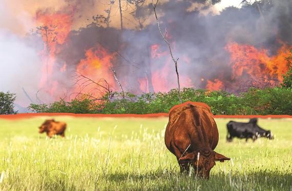 Các hãng thời trang ngừng mua đồ da để phản đối cháy rừng