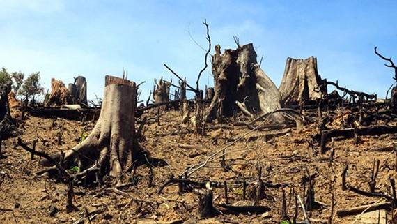 Tình trạng chặt phá rừng tràn lan là một trong những nguyên nhân gây ra hiện tượng lũ quét và sạt lở đất