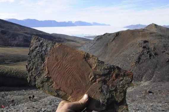 三葉蟲是化石記錄中最早出現的動物群體之中。 (圖源:Jakob Vinther, University of Bristol)