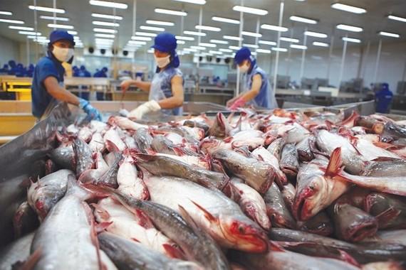 為查魚發展國內市場。(示意圖源:互聯網)