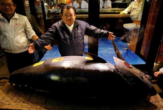 全球最貴的金槍魚在這裡,拍賣價藍鰭金槍魚以3億3360萬日元(約合3100萬美元)。(圖源:路透社)