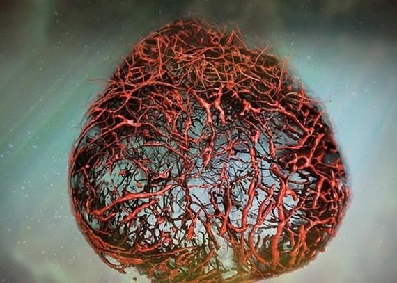 研究團隊培植出堪稱完美的3D人體血管模型。