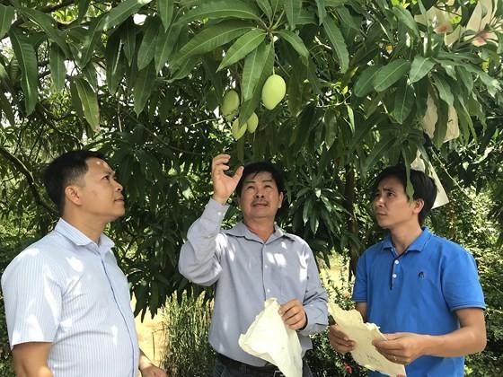 本市各部門代表考察同塔省的水果種植區,進一步連結和安全生產。