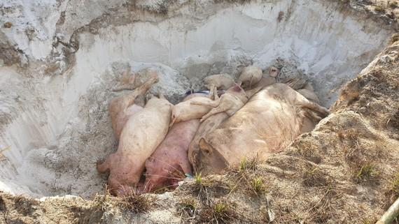Bãi chôn lấp, tiêu hủy ở xã Bình Triều rất sơ sài