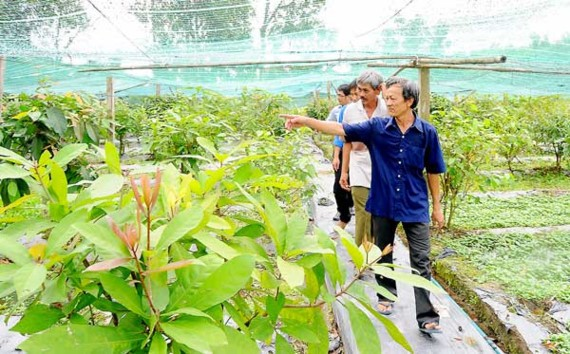 A vegetable farm meeting VietGap quality standards in Tay Ninh province. A $66 million plant will be built next year, expected to contribute in solving the situation of 'bumper crop, price drop' for local farmers (Photo: SGGP)