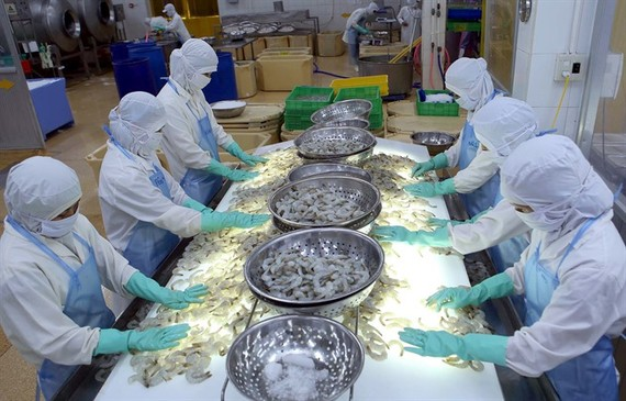  Workers process frozen shrimps for export at the Cuu Long Seaproducts Company in the southern province of Tra Vinh. (Photo: VNA/VNS)