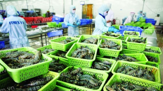 A shrimp processing plant (Photo: SGGP)