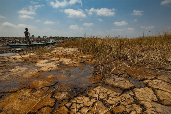 Vietnam's worst drought in 90 years killed off vast areas crops in the Mekong Delta last year. (Photo: VNA/VNS)