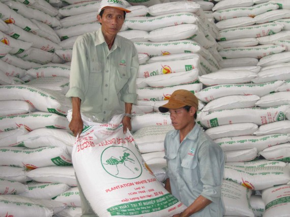 Sugar inventory reaches the highest ever level this year (Photo: SGGP)
