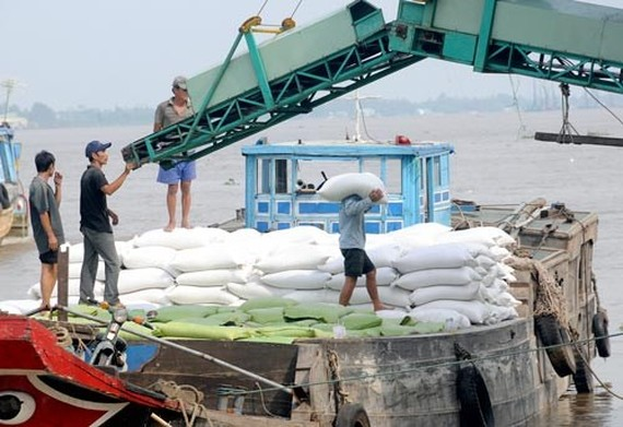 Rice bags transported aboard in the Hau river in the Mekong Delta (Photo: SGGP)