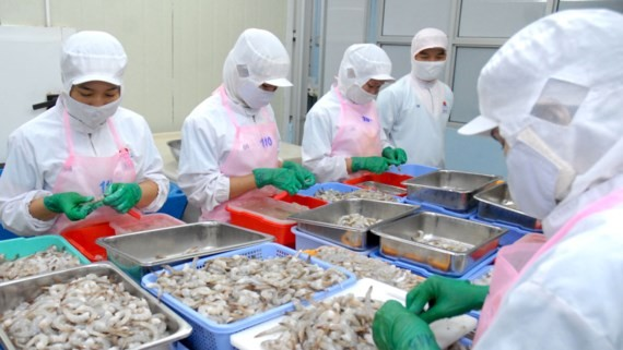 Workers processing shrimp for export at Hai Thanh Company (Photo: SGGP)