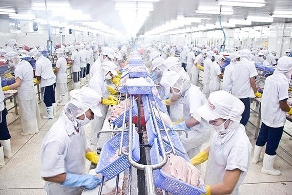 A seafood processing plant (Photo: SGGP)