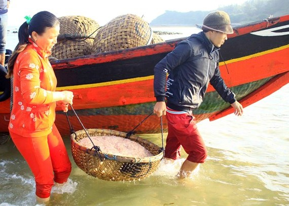 Quang Ngai fishermen enjoys bumper tiny shrimp catch yearend