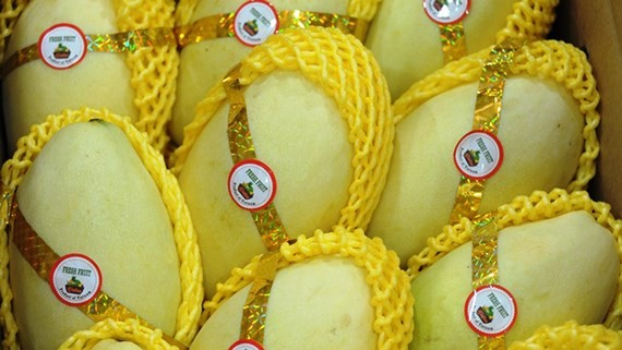 The first batch of mangoes in An Giang province has been exported to the US (Photo: SGGP)