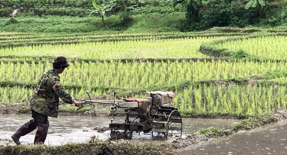 More farmers in Thailand have registered for subsidies and occupation shifting allowance from the government (Source: news.thaivisa.com)