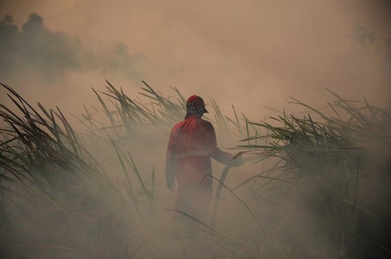 A fireman tries to put out peat land fire in Ogan Ilir regency of South Sumatra province, Indonesia, on August 5 (Photo: Xinhua/VNA)