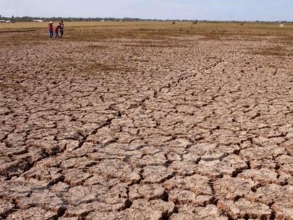Drought in the Mekong Delta region (Photo: VNA)