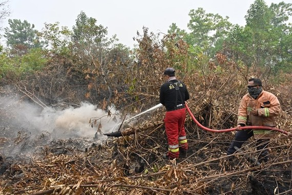 Firemen try to extinguish a fire in Kampar regency of Indonesia's Riau province, on September 13 (Photo: AFP/VNA)
