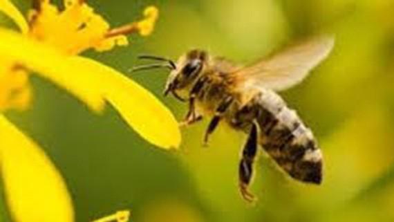 Ngân hàng thực phẩm cho các loài động vật thụ phấn