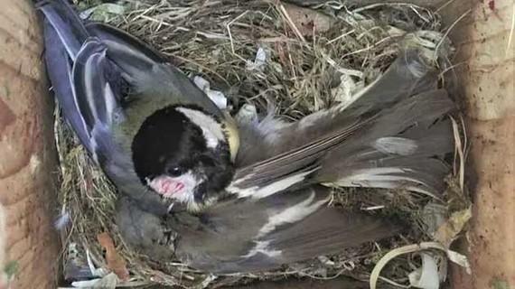 Biến đổi khí hậu đe dọa nhiều loài chim