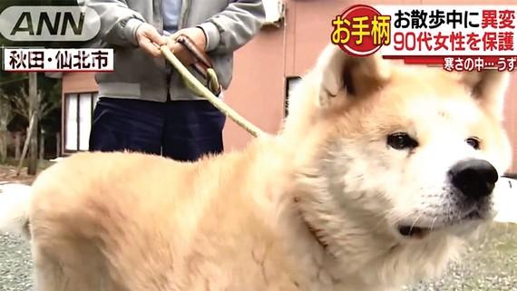 Chú chó được vinh danh vì cứu người