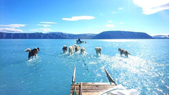 Bức ảnh đàn chó kéo xe ở Greenland đang khiến cộng đồng thế giới giật mình