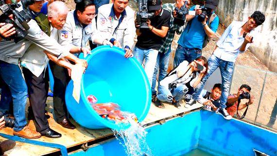 Thả cá xuống sông Tô Lịch