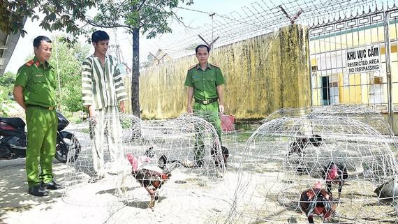 Công an phát hiện, bắt quả tang 54 đối tượng đang tham gia cá độ đá gà