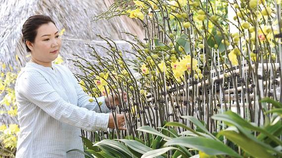 Để tạo giá trị gia tăng, vườn lan của chị Đặng Thị Thanh Thủy, quận 9, còn tạo những mẫu giỏ hoa, bình hoa đặc sắc cho nhu cầu người dân dịp tết