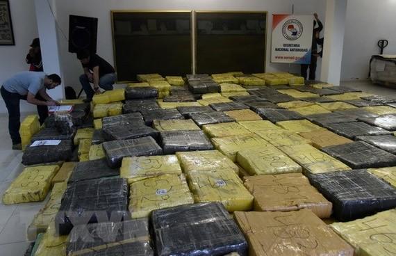 Cảnh sát Paraguay trưng bày số cần sa thu giữ trong các chiến dịch truy quét tội phạm ma túy ở Guayaibi. Ảnh: Nguồn TTXVN