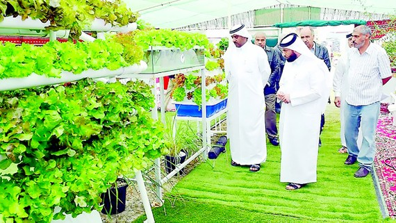 Một nông trại trồng rau theo công nghệ hiện đại tại Umm Salal, Qatar