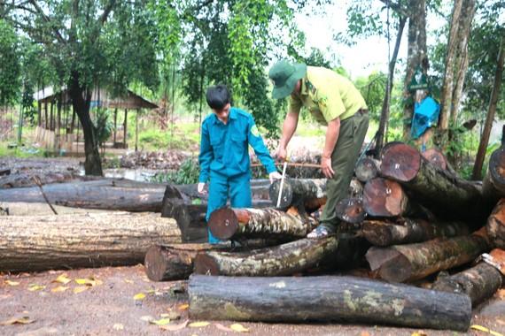 Gỗ rừng bỏ lại được tập kết về chốt bảo vệ Nông lâm trường Tân Lập