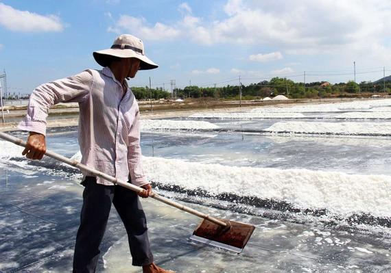 Diêm dân xã An Ngãi, huyện Long Điền thu hoạch muối