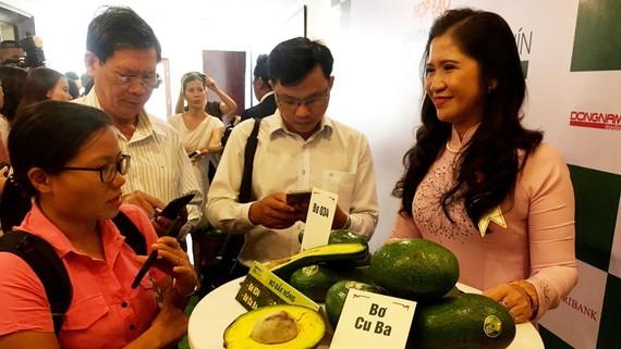 Bơ Đắk Nông được đánh giá ngon, hướng đến xuất khẩu