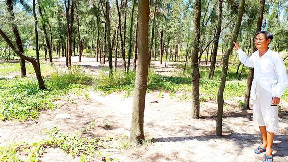 Cựu chiến binh Nguyễn Mạnh Lừng bên rừng phi lao do mình trồng