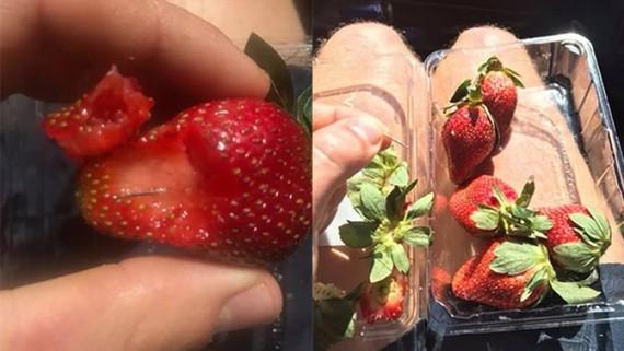 Kim khâu được tìm thấy bên trong hộp dâu tây. Facebook: Joshua Gane