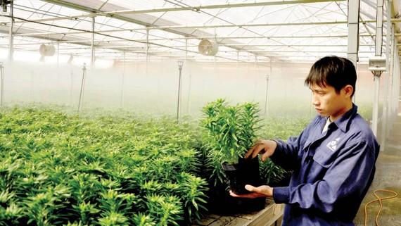 Trồng hoa công nghệ cao tại TP Đà Lạt. Ảnh: ĐOÀN KIÊN