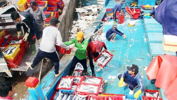 Các chủ tàu trong lúc bốc dỡ hàng thường bị trộm cá