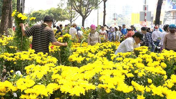 Người dân thưởng lãm các chợ hoa đầy sắc màu