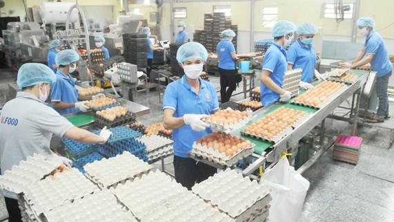 Sản xuất trứng cung ứng hàng bình ổn thị trường tết  tại Công ty Vĩnh Thành Đạt. Ảnh: THÀNH TRÍ