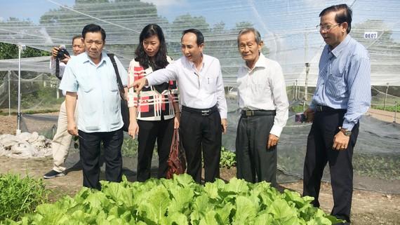 Hàng năm, UBMTTQVN TPHCM tổ chức đoàn khảo sát, kiểm tra an toàn thực phẩm  trong sản xuất nông nghiệp