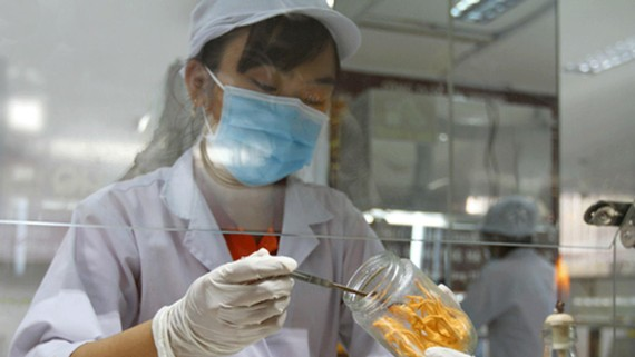 Nhân viên Công ty CP HQGANO nuôi cấy đông trùng hạ thảo