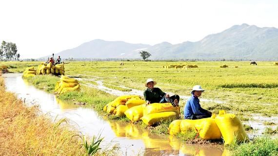 Quy tụ nông dân vào HTX nông nghiệp là vấn đề cấp thiết hiện nay