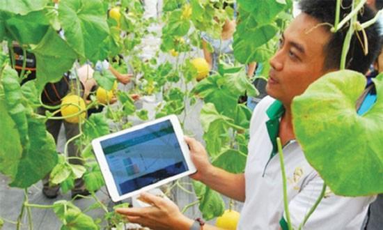 Hỗ trợ, khuyến khích HTX NN ứng dụng công nghệ cao.
