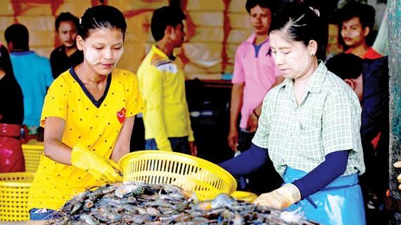 Lao động nhập cư Myanmar làm việc tại Thái Lan