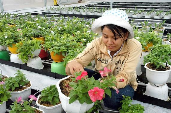Sản xuất nông nghiệp là một trong những ngành được ưu tiên vay vốn    Ảnh: THÀNH TRÍ