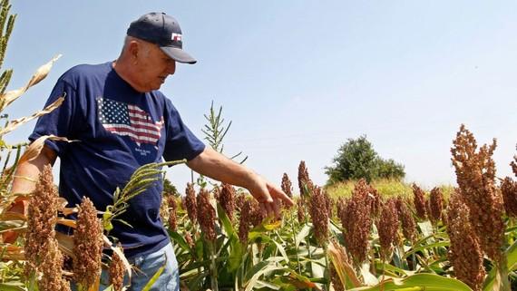 Nông dân Mỹ sắp nhận được gói trợ cấp lớn từ chính phủ Trump. (Ảnh minh họa qua qz.com)